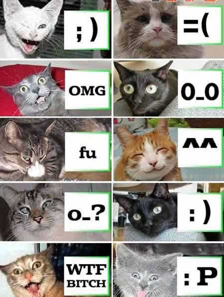 Funny Picture - Cat Emoticons