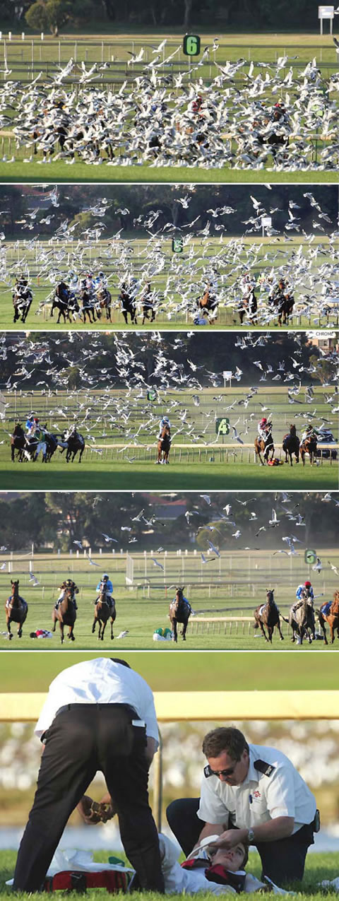 Funny Picture - Horse Race Seagull Attack