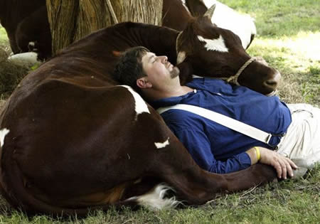 Funny Picture - A Man And His Cow