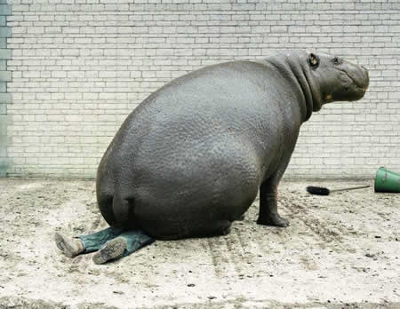 Funny Picture - Big Ass Hippo