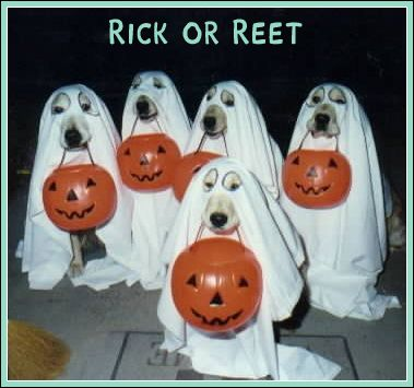 Funny Picture - Trick or Treat