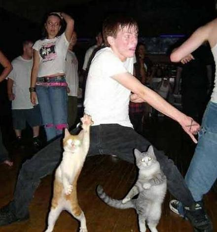 Funny Picture - Cat Dance Party!