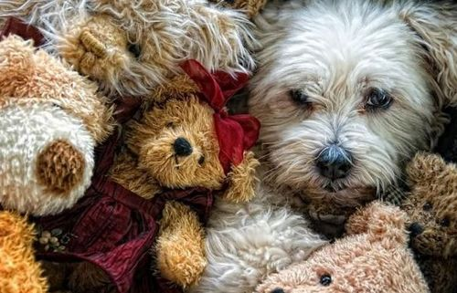Funny Picture - Teddy Pile