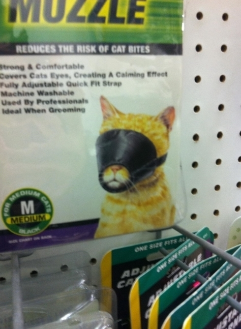 Funny Picture - Cat Muzzle