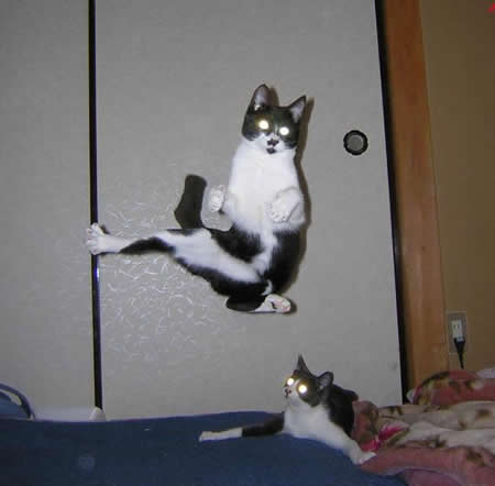 Funny Picture - Karate Cat