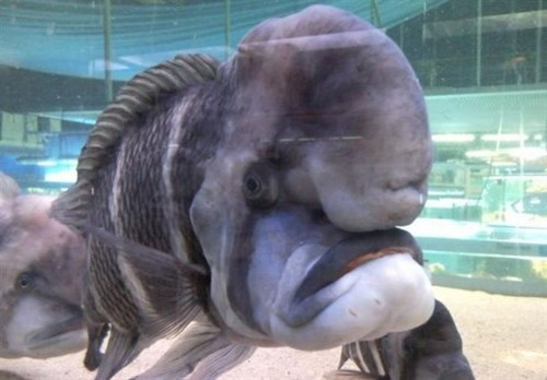 Funny Picture - Angry Fish