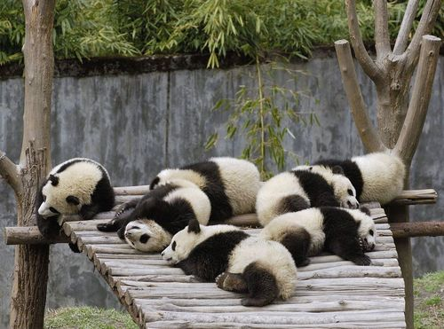 Funny Picture - Bored Pandas