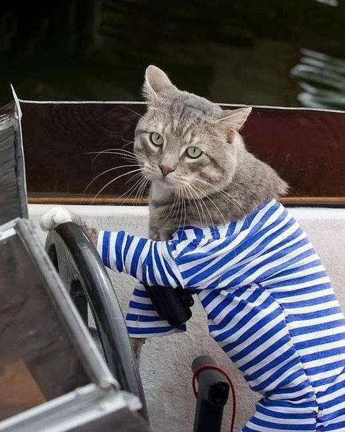Funny Picture - Sea Bound Cat