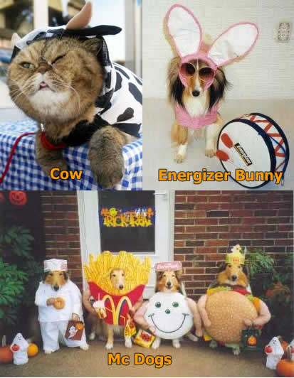 Funny Picture - Animal Halloween Costumes