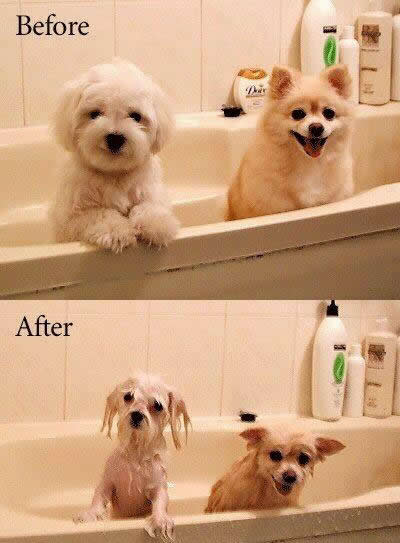 Funny Picture - Before And After A Bath